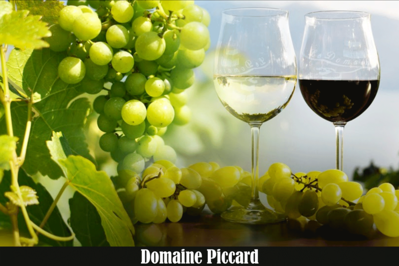 Simply wine chez Domaine Piccard